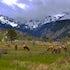 Moraine Herd