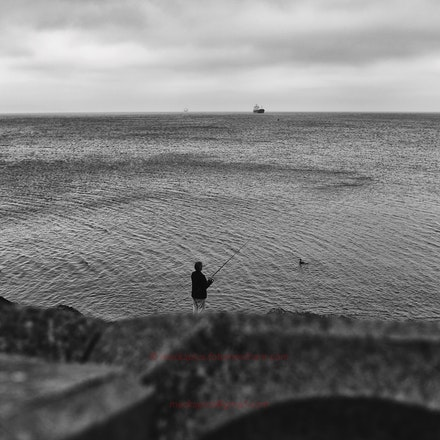 The patient and optimistic cormorant - A very gloomy autumn day in Bangor, County Down, Northern Ireland.