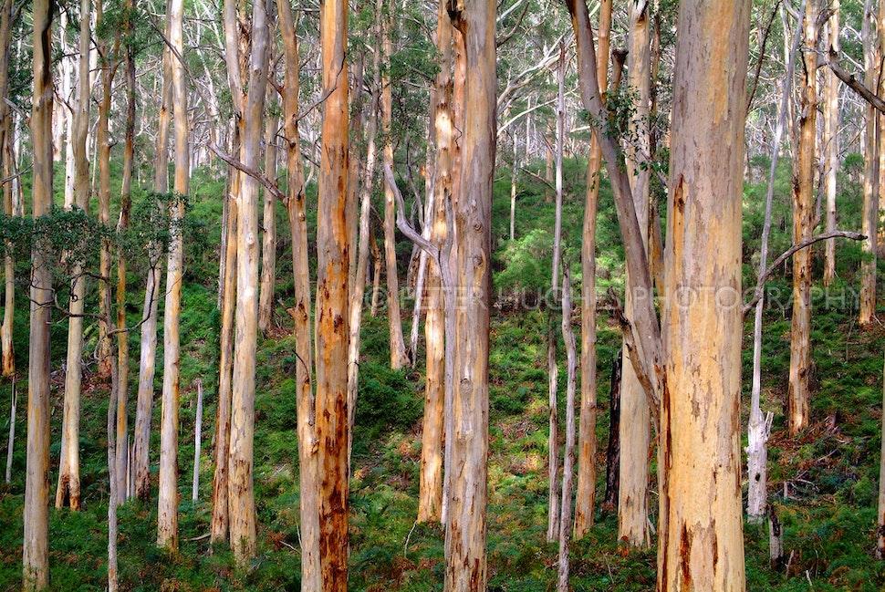 Boranup Forest 001