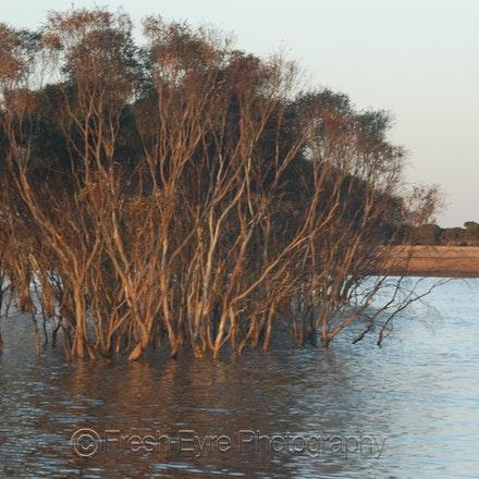 07Lagns16_019_Kerri Cliff - Lake in a paddock after unusually heavy summer rain