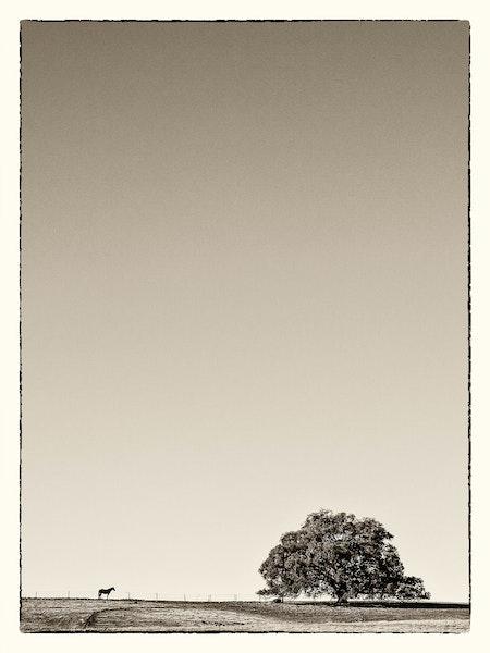 Lone-Horse
