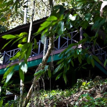Borneo: Tabin Wildlife Reserve, Sepilok & Sandakan - Image taken at the Tabin Wildlife Reserve, Sepilok, Sandakan  2011