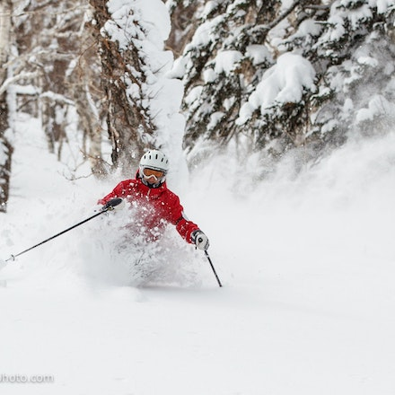 Skiing Furano Powder - Female skier powder skiing through the trees after the late season snow storm at Furano ski resort (Hokkaido, Japan). Photo: Jan...