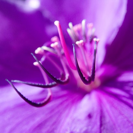 Purple Flower - Copyright © 2015 Melissa Fiene Photography. All rights reserved. All images created by Melissa Fiene are © Melissa Fiene Photography.
