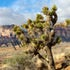 10x8 2K3A0306 3-1-14 Red Rock Canyo 0306n