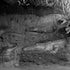 Crocodiles Taronga - Each archival photograph is stamped and signed by Robert and a brief description of how it was taken.
