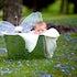 DSC_5729 - peek-a-boo fairy