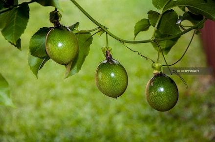 10 - Passionfruit