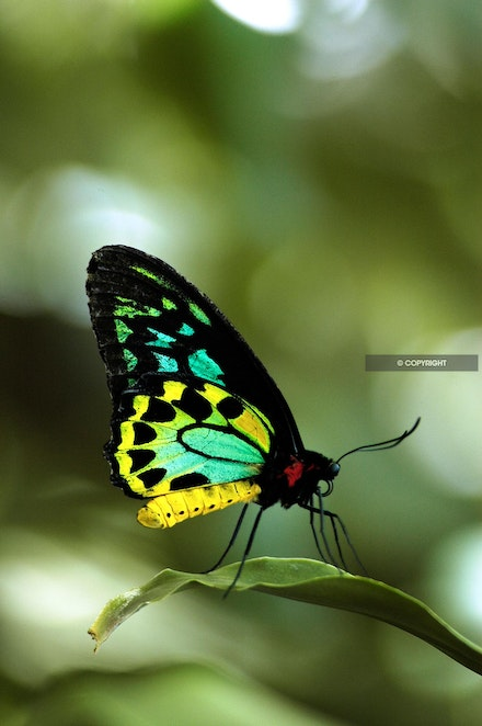 3 - Butterfly-tropical