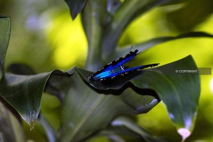 9 - Blue-butterfly