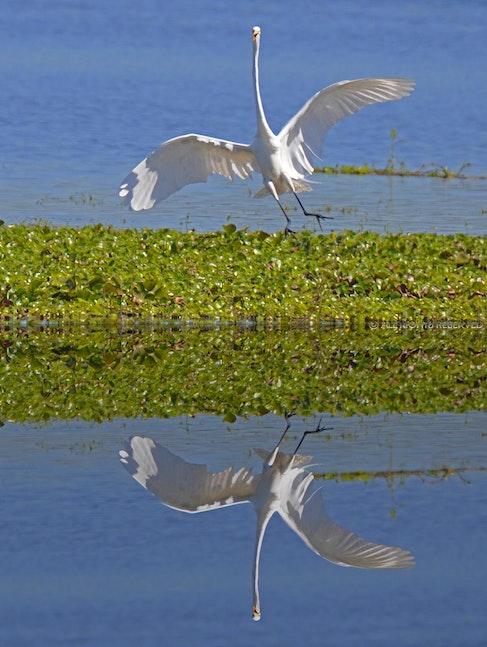 Mirror Flight