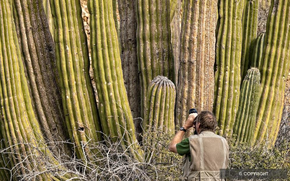 Cactus Wall - Photographing giant Cardon cactus,Isla Santa Catalina, Baja California Sur, Mexico