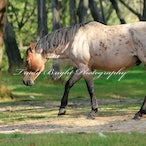 Brumbies of the Snowy Mountains - Brumbies of the Snowy Mountains