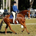 Matcham Valley Show Rider Championships 11.8.2013 - Because of the large number of images it is recommended to place images of yourself in your favourites...