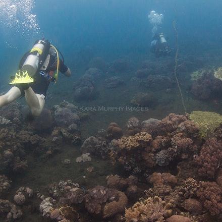 Volcano dive, Sumbawa - Divers explore the volcanic underwater world of Sumbawa, Indonesia.