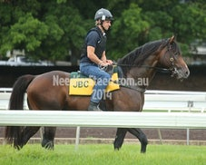 5 DEC RANDWICK JUMP OUTS AND TRACK WORK