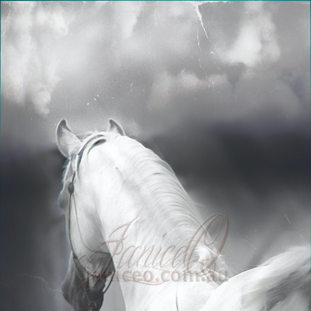 New Year Soft - Purebred Arabian white stallion, Silver Wind Van Nina. Digital painting based on a photo by Sharon Meyers Photography.