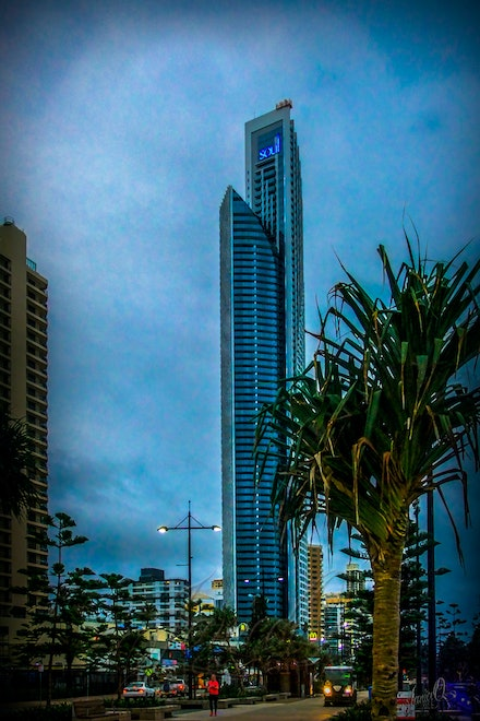 Urban Jungle - Palms and pines vie with skyscrapers in the Gold Coast city skyline.