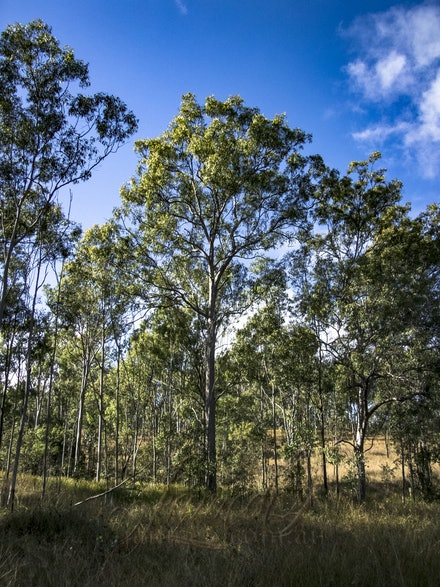 Native bush - Trees reclaim the land.