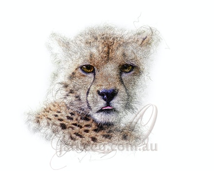the_watcher_pencil - The cheetah is the world's fastest land animal. They can run 70 mph (or 110 kph), which is as fast as cars drive on the highway. The...