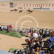 Race 4 More Of The Zaim_Birdsville