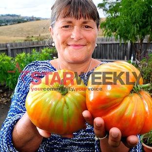 giant tomato - Ljubica Bosevska's amazing tomatoes