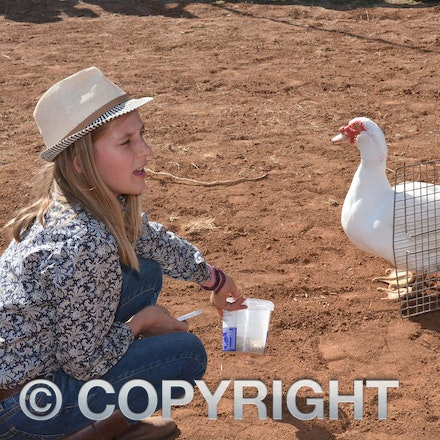 170526_DSC_0865 - Action at the 2017 Isisford Sheep and Wool Show