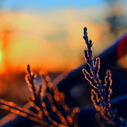 1.24.15 frostymorning (3)
